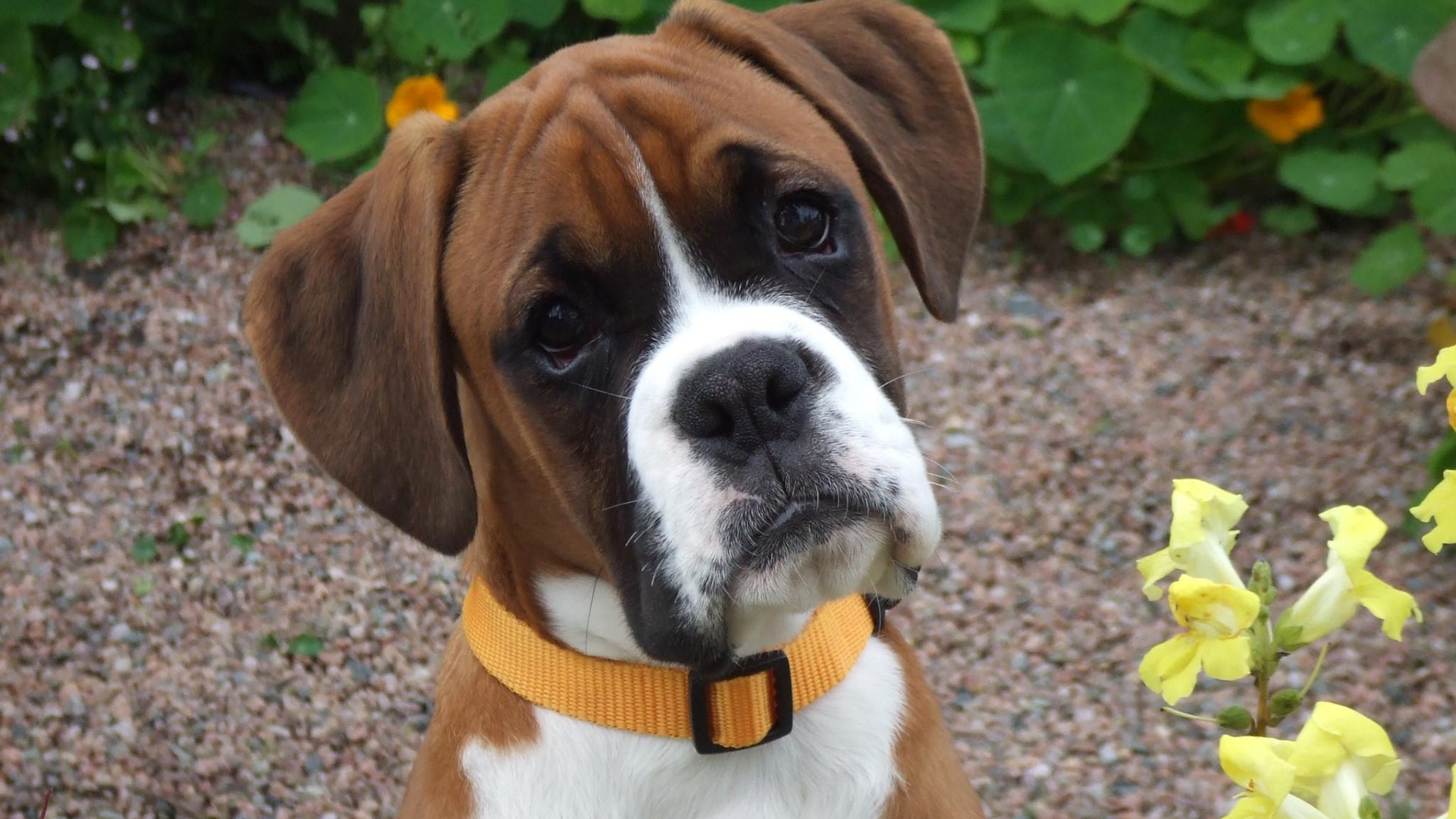 Ученые выяснили, что собаки намного умнее, чем считалось ранее