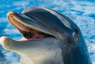 Шокирующий эксперимент. Изучена речь дельфинов. Установлено: они умнее, чем люди