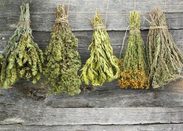 Стишок - запоминалка, целебные травы