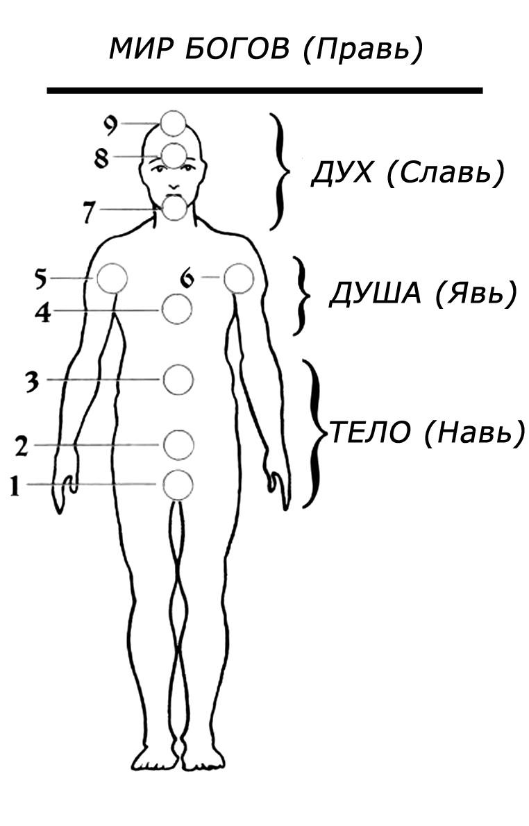 Энергетическая система человека — виды чакр