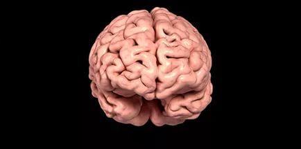 Третий мозг человека