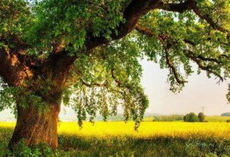 поможет дерево