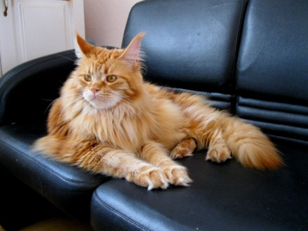 Самыми распространенными домашними «целителями» считаются кошки