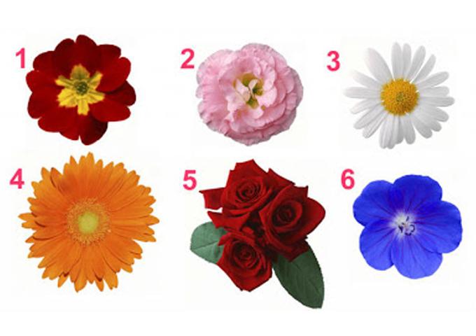 Выберите цветок и узнайте тайны вашей женственности!