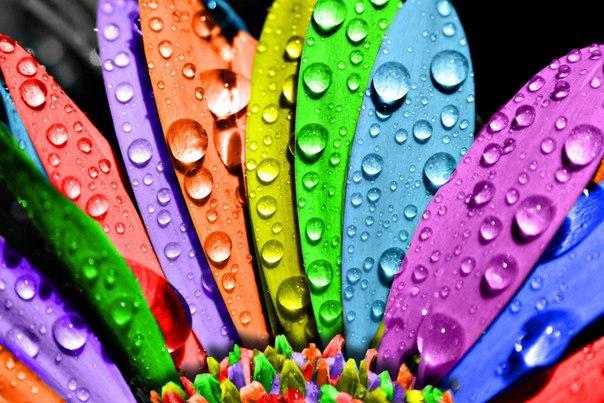 Применения цветовой гаммы в Биоэнергетике