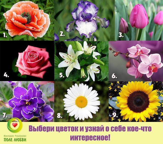 Пройдите забавный цветочный тест