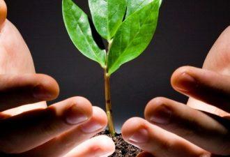 Посадить болезнь в горшок: способ лечения от всех болезней