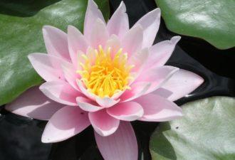 Мудра «Парящий лотос» поможет от женских болезней