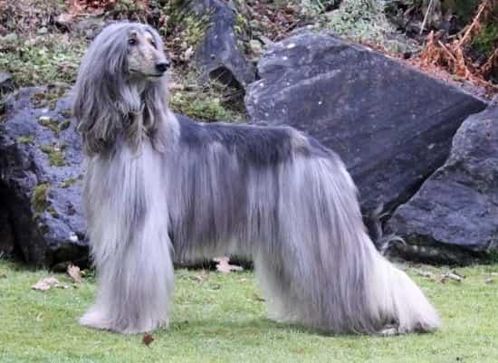 Ваш знак зодиака расскажет, на собаку какой породы вы больше всего похожи