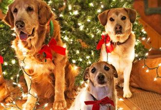 Новогодние приметы на удачу: как встретить 2018 год Желтой Собаки