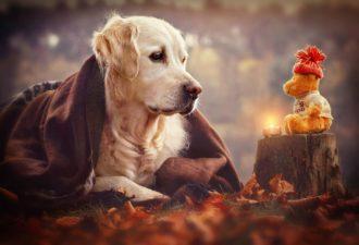 Слово-девиз для каждого знака Зодиака на 2018 год Жёлтой Собаки