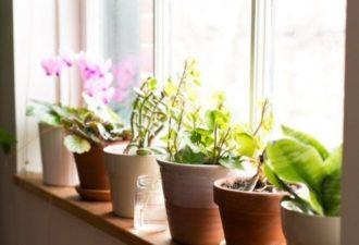 8 простейших советов по фэн-шуй, которые приносят достаток и благополучие