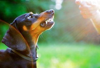 «Собака ее невзлюбила!»: 10 странных мужских причин для расставания
