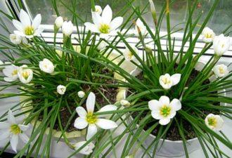 Какие растения привлекут в ваш дом счастье и процветание