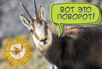 «Брось его, он Козерог!»: лучшие друзья девушек - это гороскопы