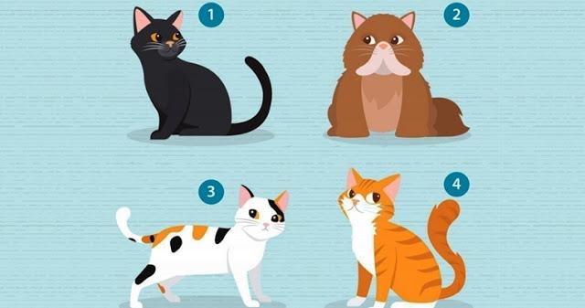 Выберите кошку и мы расскажем, что вам нужно в отношениях!