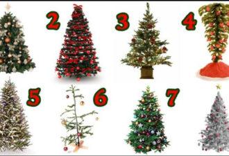 Выберите рождественскую ёлку!