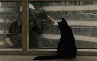 коты и мойщики окон