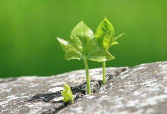 Преодоление препятствий: инструкция к применению
