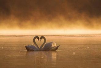 Красивое стихотворение Эдуарда Асадова «Слово о любви»
