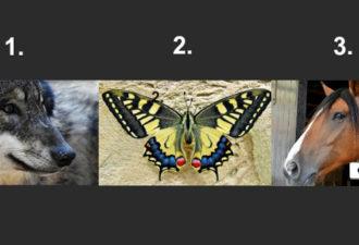 Выберите животное и узнайте в какой энергии вы нуждаетесь