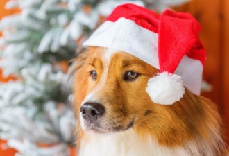 Как встретить 2018 год Желтой Собаки: новогодние приметы на счастье