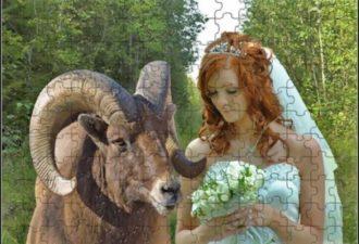 Любовь зла, полюбишь и козла по Знаку Зодиака