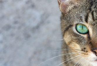 У настоящих женщин — психология кошки
