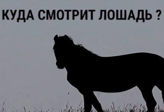 Тест на тип личности. Выбери направление, куда смотрит лошадь и читай результат!