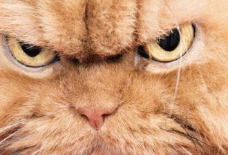 5 знаков Зодиака, спорить с которыми не стоит, когда они не в настроении